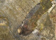 Fragment der verkohlten Haut des topographischen Satelliten des Lander stockfoto