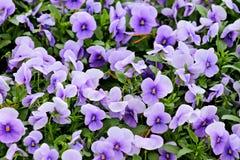 Fragment des großen Blumenbetts Lizenzfreies Stockfoto