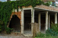 Fragment of a dilapidated building. The stems of ivy twist the walls Royalty Free Stock Image