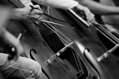 Fragment double basses in the orchestra Stock Photos