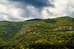 Fragment du mont Carmel Photos stock