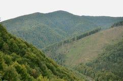 Fragment du terrain montagneux dans les Carpathiens, Ukraine La forêt est pardonnée par les soulagements des montagnes carpathien photo stock
