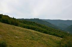 Fragment du terrain montagneux dans les Carpathiens, Ukraine La forêt est pardonnée par les soulagements des montagnes carpathien photos stock