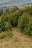 Fragment du terrain montagneux dans les Carpathiens, Ukraine La forêt est pardonnée par les soulagements des montagnes carpathien photo libre de droits