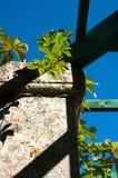 Fragment einer verfallenen Steinwand mit dem Holzrahmen greenhous Stockbild