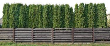 Fragment eines ländlichen Zauns von den hohen zapfentragenden immergrünen Bäumen I Lizenzfreies Stockbild