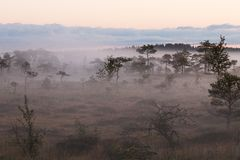 A misty morning in Estonian bog. A fragment of Estonian bog during the foggy summer morning. A truly wild and wet place royalty free stock photo