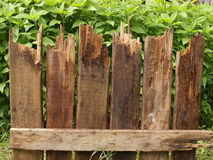 Fragment of fence of rotten boards Royalty Free Stock Image