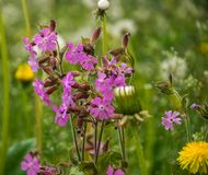 Fragment of a meadow close-up with blooming wildflowers. stock photo