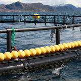 Fragment of fish farm for salmon growing Royalty Free Stock Photos