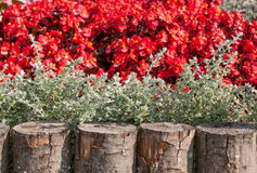 Fragment of a flower bed. Stock Photo