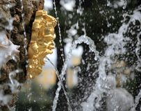 Fragment of a fountain. In the Summer garden of St. Petersburg Stock Photography