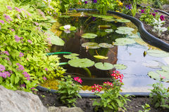 Fragment garden with an artificial pond Royalty Free Stock Photography