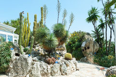Garden cacti and succulents in Monaco Stock Photography