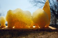 Fragment a golden honeycomb in sunlight. Horizontal outside shot. royalty free stock photos