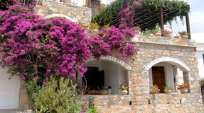 A fragment of Greek houses in flowering plants. Stock Photos