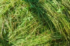Fragment of green hay stock photo