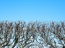 Fragment of hedgerow against the sky. Abstract background Stock Photography