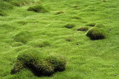 Fragment  of hilly terrain with green grass Royalty Free Stock Image