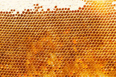 Fragment of honeycomb Royalty Free Stock Photos