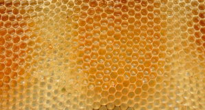 Fragment of honeycomb with full cells Stock Image