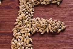 Fragment of the inscription of beer by malt grains on wood background. Craft beer brewing from grain barley malt. Ale or lager fr. Om pilsner malt royalty free stock images