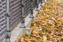 Fragment of an iron fence and lot foliage Stock Photo
