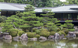 Fragment of a Japanese garden with artificially shaped pine tree Royalty Free Stock Image