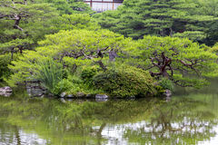 Fragment of a Japanese garden with artificially shaped pine tree Royalty Free Stock Photography