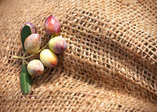 A fragment of a knotted sack with olives Stock Photography