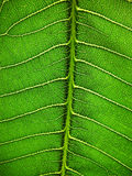 Fragment of leaf Royalty Free Stock Image
