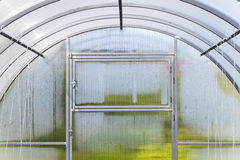 Fragment of modern greenhouse interior Stock Photography