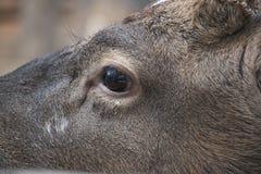 Fragment muzzle deer Stock Photos