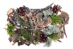 Fragment of natural forest ground cover with moss, cones and other natural objects. Isolated ion white studio shot royalty free stock images