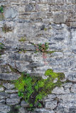 Fragment of old stone wall Royalty Free Stock Photo