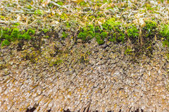 Fragment of an old thatched roof. Fragments of old thatched roof made of wheaten straw, covered with green moss Royalty Free Stock Photos