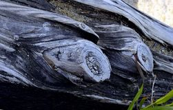 Fragment old trunk on the shore Royalty Free Stock Photography