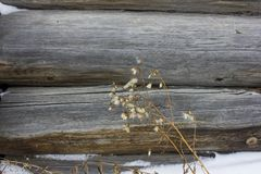 Fragment of an old village house in the north of Russia. Old weathered magazine. Texture of log shear Stock Image