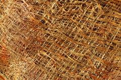 Fragment of palm tree bark. Palm tree bark close-up texture Royalty Free Stock Photography