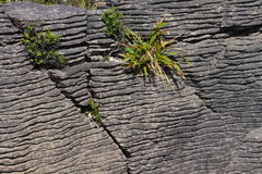 Fragment of Pancake Rocks Royalty Free Stock Photo