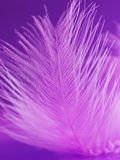 Fragment of pink feather Stock Photography