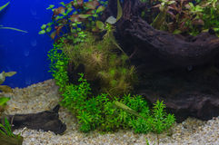 Fragment of the planted aquarium Stock Photography