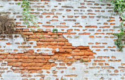 Fragment of a red brick wall Stock Images