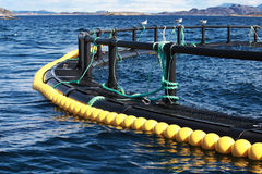 Fragment of round fish farm. Part in Norwegian Sea Stock Photos