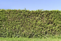 Fragment of a rural fence hedge Stock Image