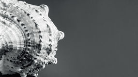 Fragment of seashell. Stock Photo