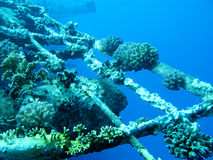 Fragment shipwreck with reef coral on the bottom, underwater Royalty Free Stock Image