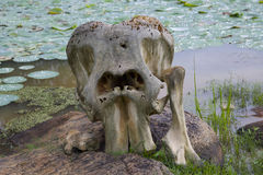 Fragment of the skeleton of an animal. On the background of a pond with water lilies Royalty Free Stock Photos