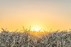 Fragment straw bale close-up in light of the low evening sun backlight. Dry hay background on the sunset Stock Photos
