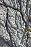 Beautiful cracks on the rock Royalty Free Stock Image